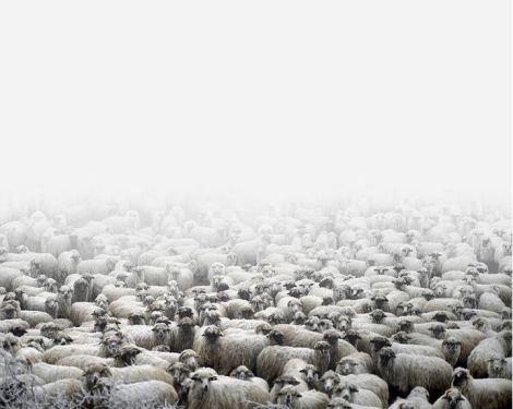 Tamas Dezso, Sheep Farm, Silvasu de Sus, West Romania, 2011