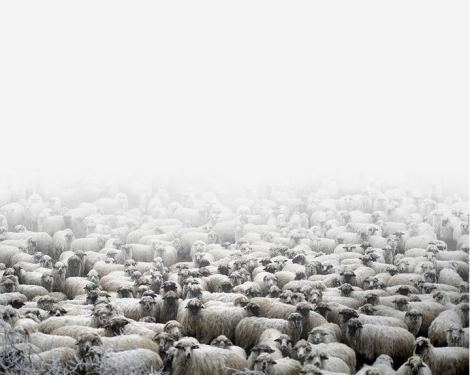 Tamas Dezso, Sheep Farm, Silvasu de Sus, West Romania, 2011