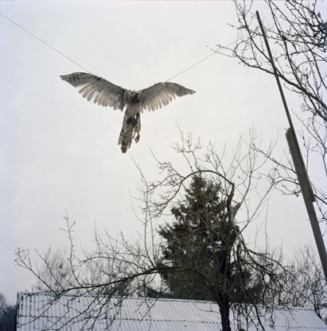 Falcon killed by Hanna Zavorotina (78 years) and hung up as trophy, after trying to hunt her chickens. Kapavati village. Chernobyl, Ukraine. December 2010.