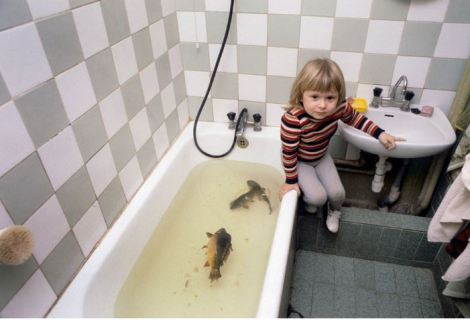Live carp, preparing for christmas eve dinner, 1980s poland niedenthal