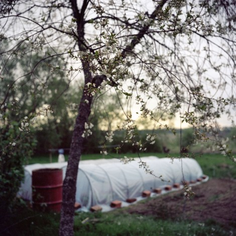 Mariya Kozhanova, Cherry Blossom, 2012, from Declared Detachment series